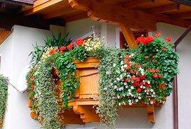 Цветы на балконе. Какие цветы на балконе посадить 61